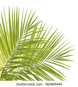 Palm leaves isolated on white background