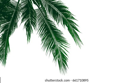 Palm leaves isolated on white background.texture,copy space.