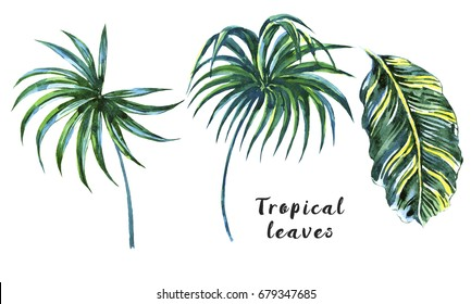 Palm leaves, jungle leaf set isolated on white background. Tropical watercolor botanical illustrations, natural floral elements