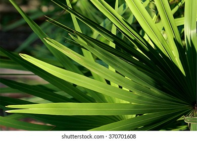 palm leaves in light and shadow