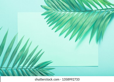 palm leaves on paper background