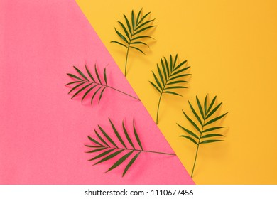 Palm leaves on vibrant pink and yellow background. Tropical summer background.