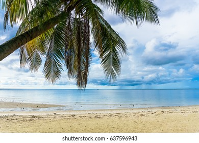 Palm leaves on the wild tropical beach cloud sky on the background