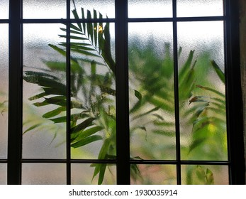 Palm leaves outside the ground glass window.