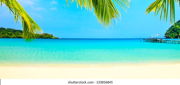Palm leaves over the beach