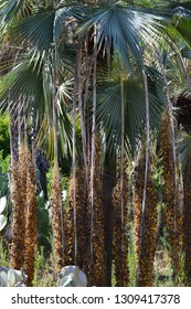 palm leaves in park