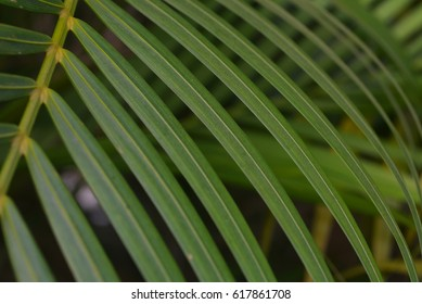 Palm leaves pattern for background. (Selective focusing)