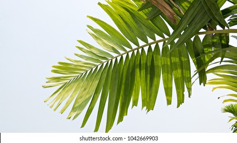 Palm leaves reaching to the sky