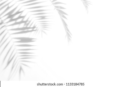 palm leaves and shadows on a white wall