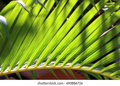 Palm leaves with sunlight in nature background