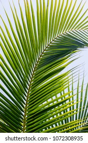 Palm leaves. Sunny day. Blue sky.