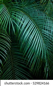 palm leaves  - tropical exotic palm - rain forest plants - vegetation of tropical forest