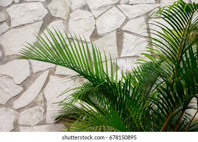 Palm leaves and white stone wall