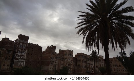 Palm in the middle of an orchard surrounded by buildings in old Sana'a