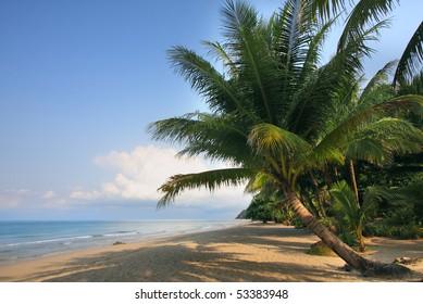 The palm near the sea