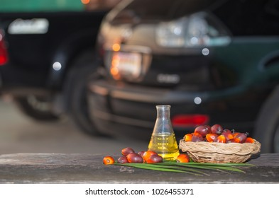 Palm and Palm Oil Extracted vegetable oil can be used as a substitute for biodiesel.