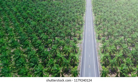 Palm oil plantation field with asphalt road