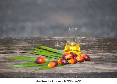 Palm oil raw materials are processed into vegetable oil and biodiesel. Is an alternative energy