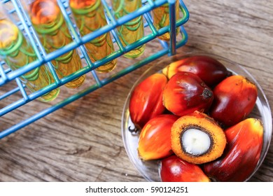 Palm oil research. Concept of research on palm oil biodiesel or cooking oil.
