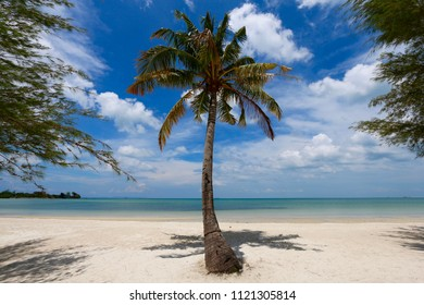 Palm on the beach, Cambodia