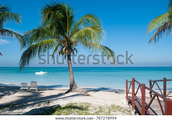 Palm on the beach of Cayo Jutias in Cuba. Boat and blue sea have a rest on the golden sand. Beach in the Gulf of Mexico.