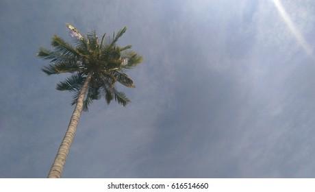 Palm on the beach. Thailand, Phuket.