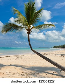 Palm on caribbean beach with white sand,Punta Cana