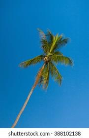 Palm Overhead Exotic Getaway