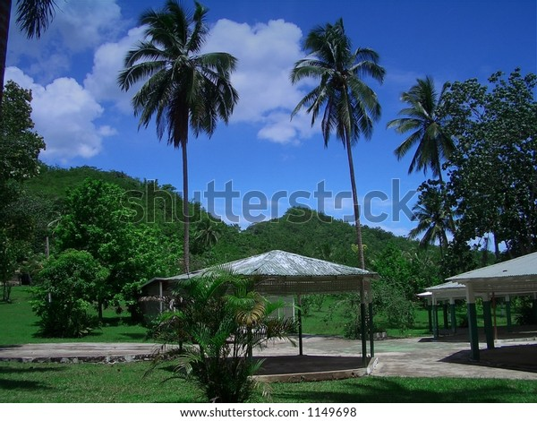 PALM PAIR. his photograph was taken near Lethe on the bank of the Great river south west of Montego Bay, Jamaica, Caribbean.