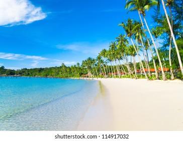 Palm Panorama Exotic Paradise