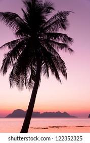 Palm Paradise Tree Silhouettes