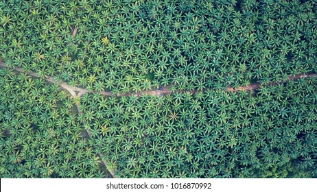 Palm Plantation Aerial Indonesia