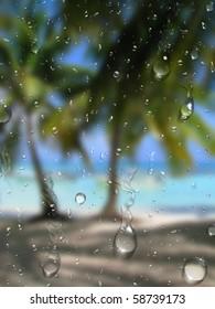palm rain