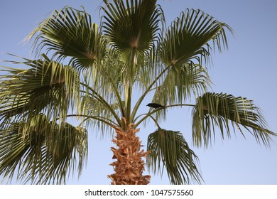 Palm and raven on blue sky background