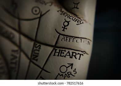 Palm reading lines guide in macro heart and affection