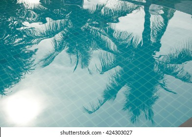 Palm Reflex In A Pool
