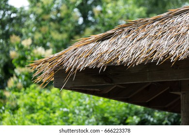 Palm Rooftop with tropical blurred background