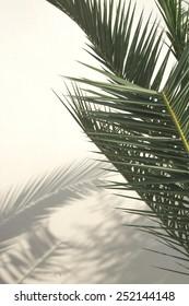 Palm shadow on white wall, Majorca, Balearic islands, Spain.