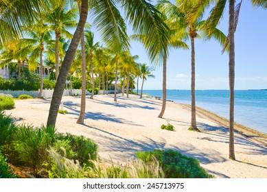 Palm shrouded beach on Sunset Key