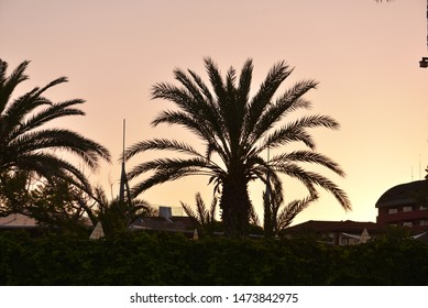 An palm silhouette in morning sunrise light.