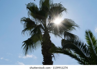 palm silhouette and sun