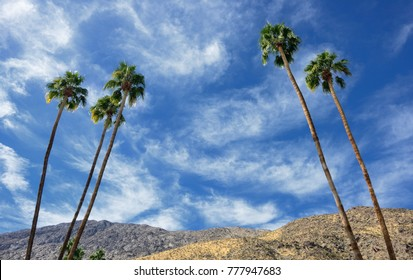 Palm Springs California with palm trees and desert mountains in background
