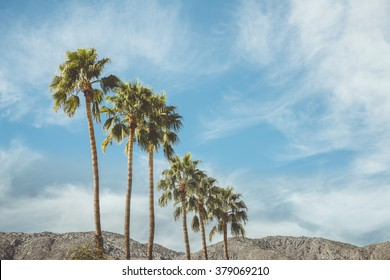 Palm Springs Vintage Movie Colony Palm Trees and Mountains  Vintage style image meant to portray the re-birth of Palm Springs and it's modernism and style.