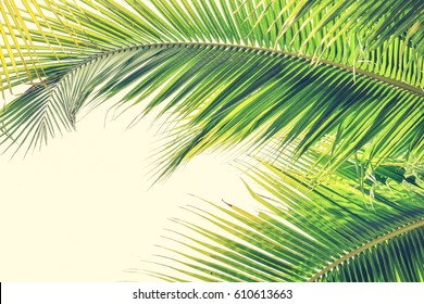 Palm Sunday background with green tropical tree leaves against natural sky