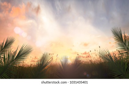 Palm Sunday concept: Border of palm leaves over meadow autumn sunset background