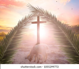 Palm Sunday concept: The Lamb in front of the Cross of God