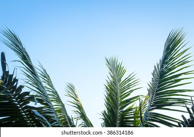 Palm sunday concept: Leaves frame of coconut branches with cloudy blue sky background.