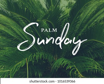 Palm Sunday Holiday Text Over Green Palm Tree Background