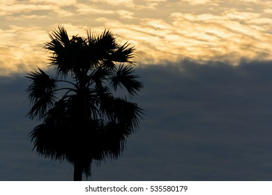 Palm with sunrise