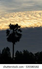 Palm with sunrise